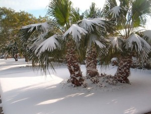 Florida snow